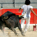 Barcelona bullfighting