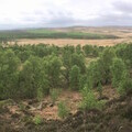 Natural regeneration at Eastern Moors, Peak District National Park © Alastair Driver, Rewilding Britain