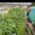 Acomb Allotments, a hidden gem