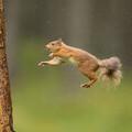 red squirrel © scotlandbigpicture.com
