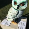 BoB the Owl