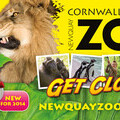 Newquay Zoo advertising campaign