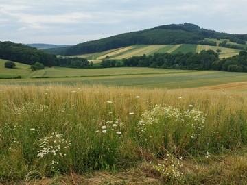 Farmer cluster site in Austria GWCT