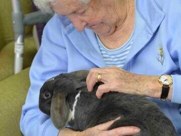 Doreen Porter enjoys a cuddle with a rabbit